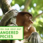 Small monkey sitting in a tree, image used for Christian Tedrow blog on how to help out endangered species